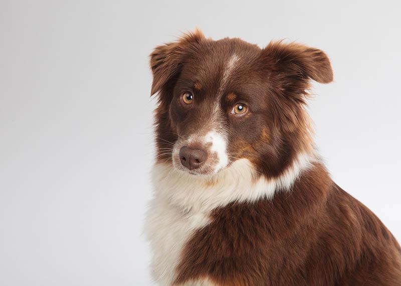 Therapiehund Laika
